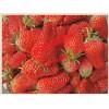 达赛莱克特草莓苗欢迎来电咨询