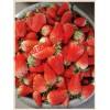 红实美草莓苗合作社